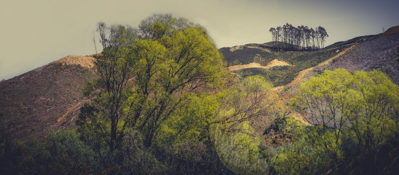 Deforestation-NewZealand-2016-HEYDT--44-Edit.jpg