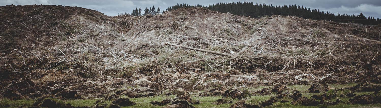 Deforestation-NewZealand-2016-HEYDT-735.jpg