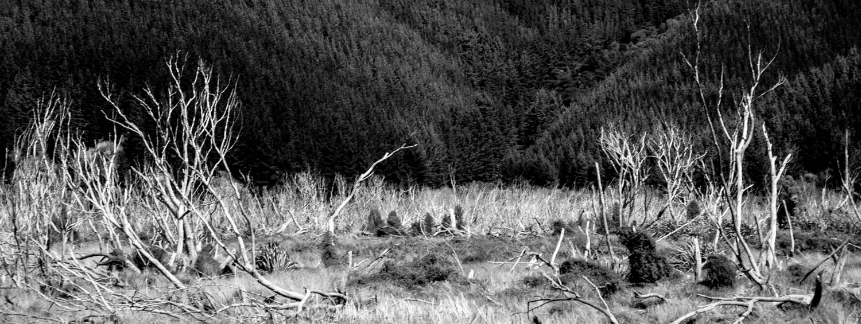 Deforestation-NewZealand-2016-HEYDT-762.jpg