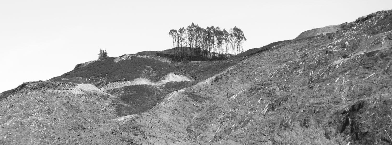 Deforestation-NewZealand-2016-HEYDT-902.jpg