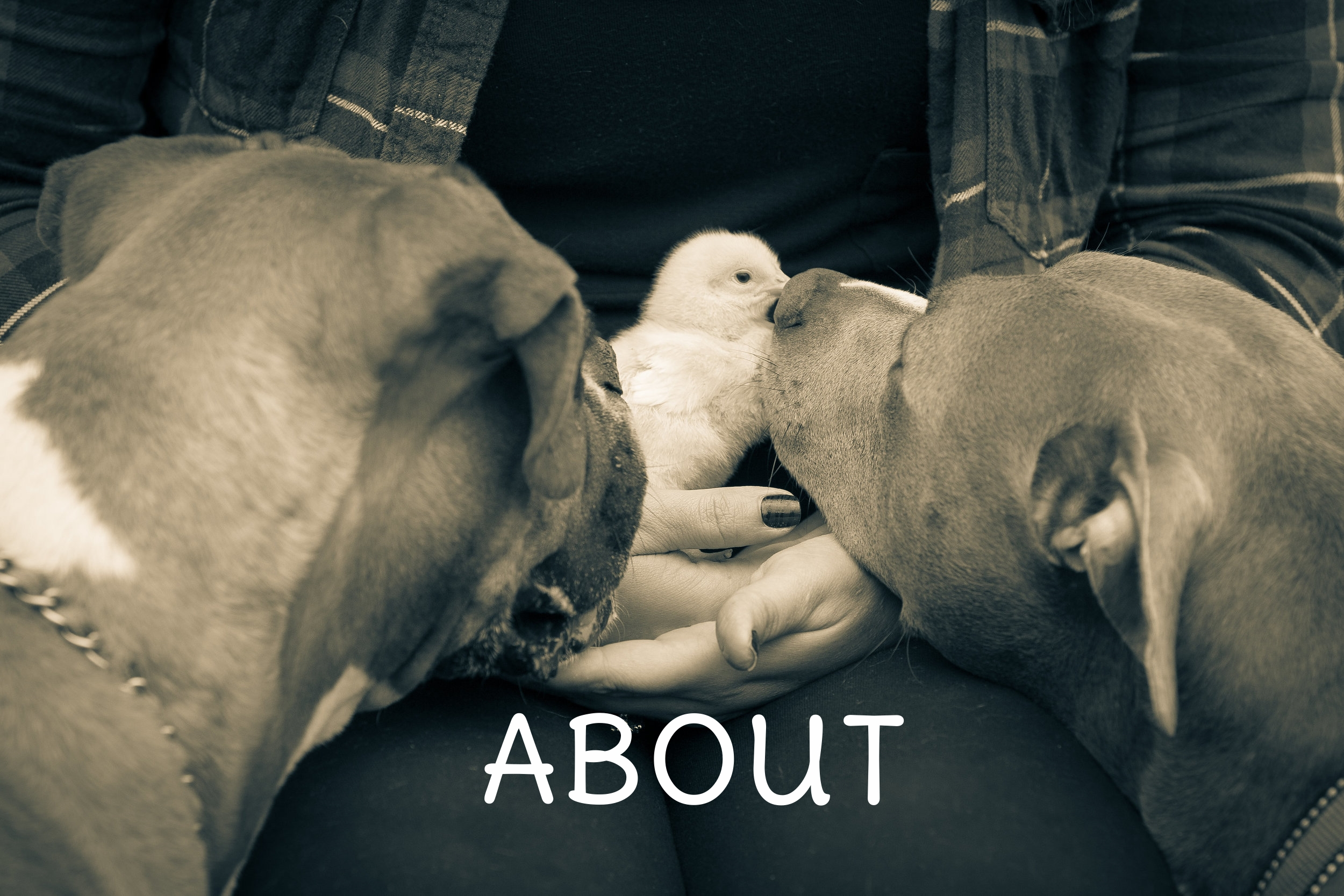 William Graves Photography, Doggies-38.jpg