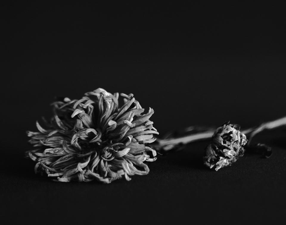 Uemura_flowers005-2.jpg