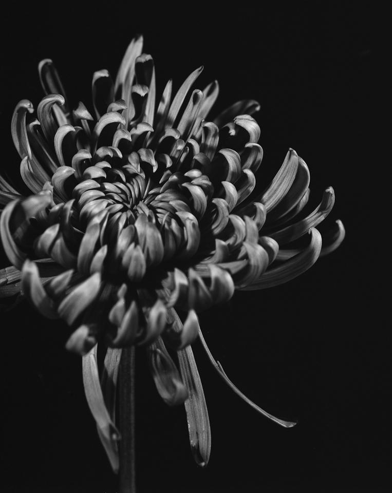 Uemura_flowers007-2.jpg