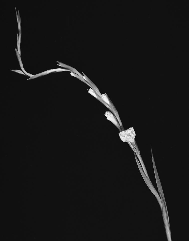 Uemura_flowers018.jpg