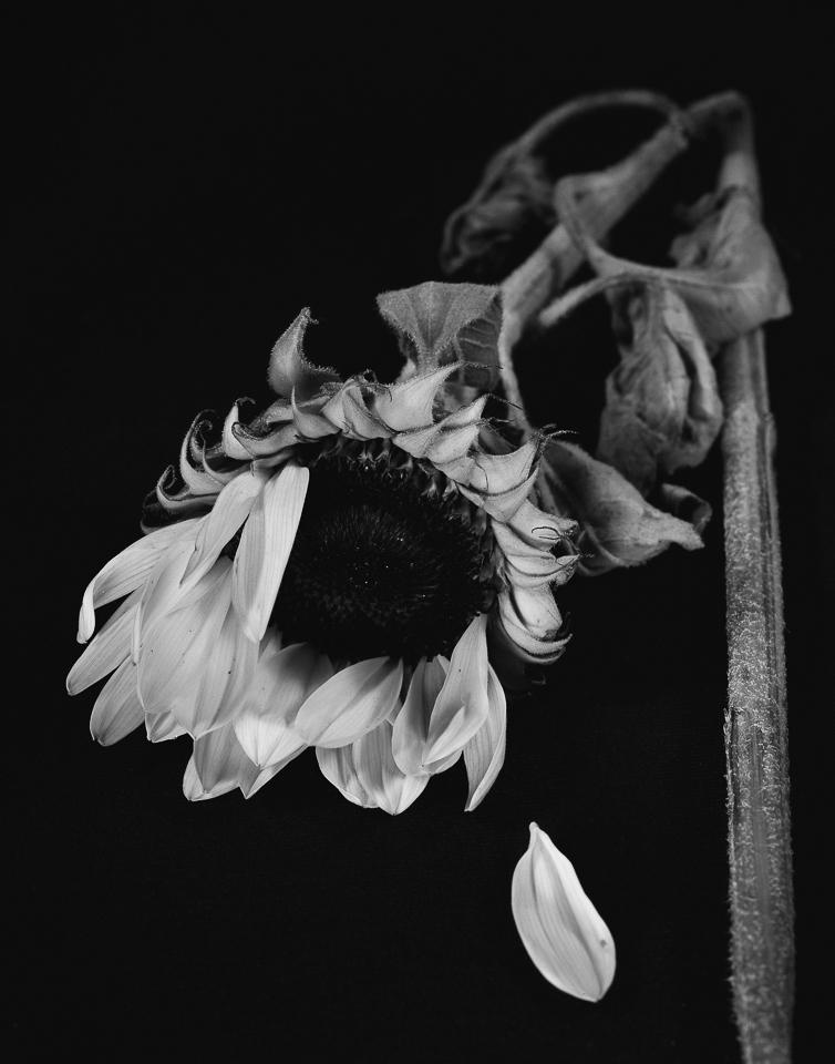 Uemura_flowers015-2.jpg