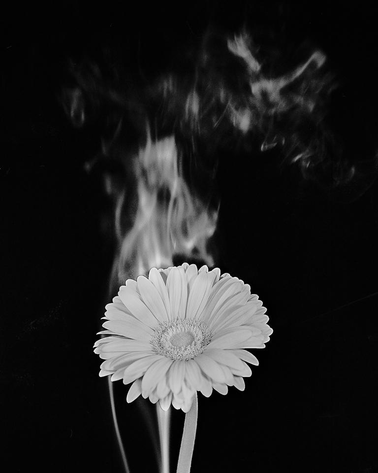 flower_condition_52.jpg