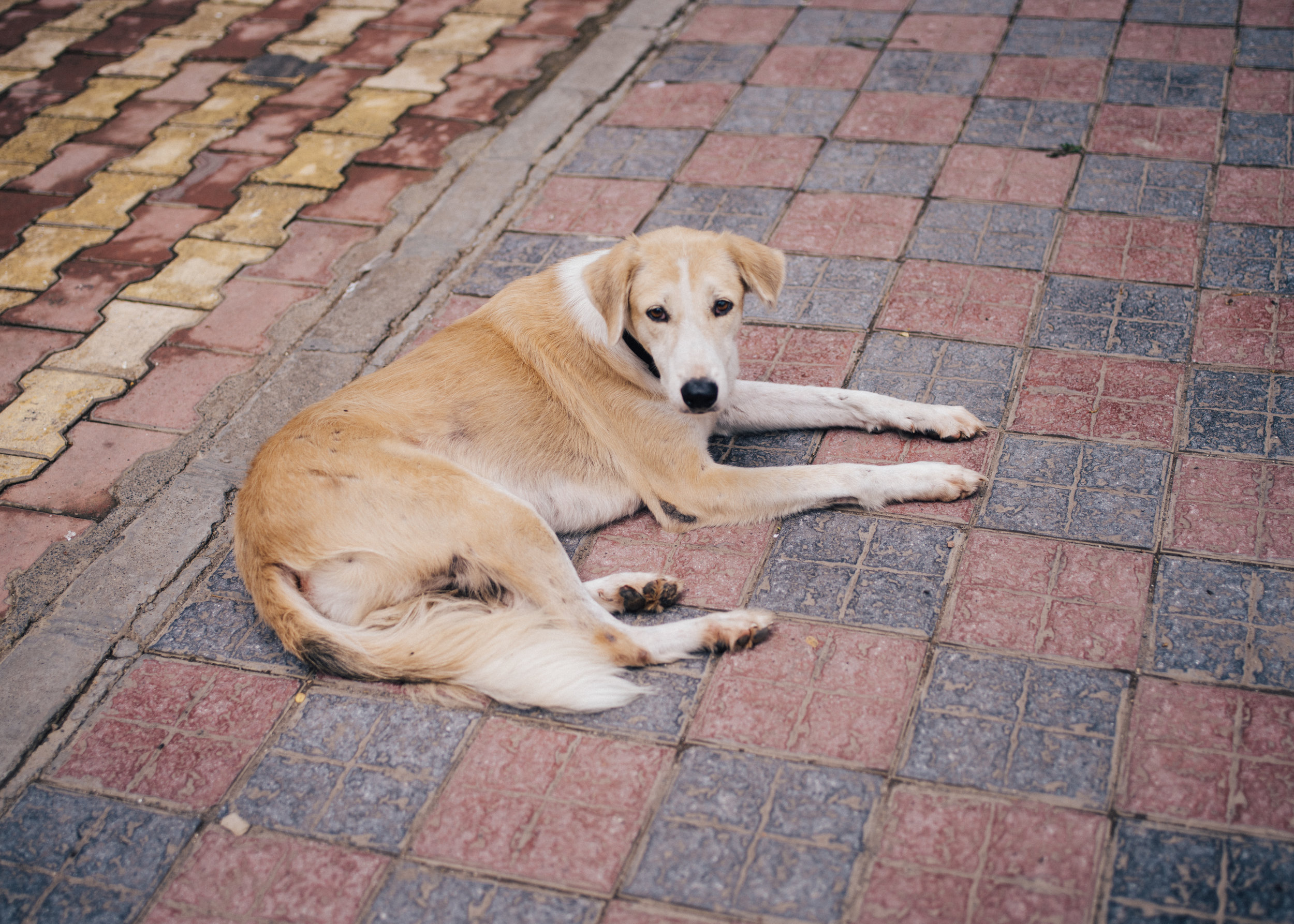 いつも眠そうな近所の犬