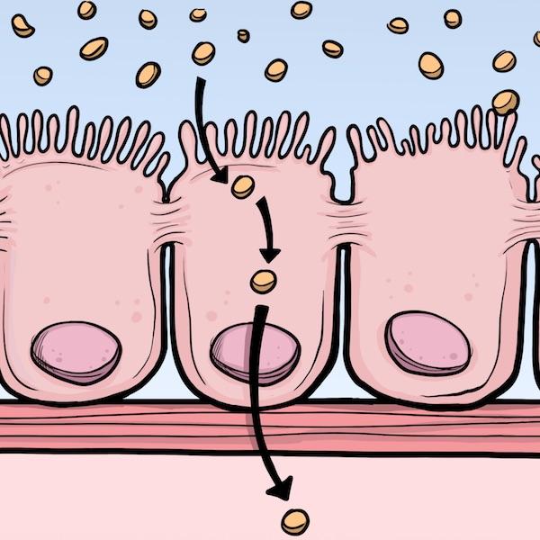 """from """"gut reaction"""" – beyond celiac"""