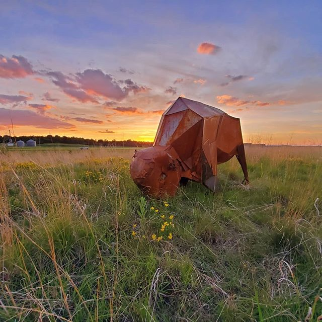 Tonight was a beautiful, still and quiet evening on the prairie. Just insects and birds. So many reminders of the wonder of being alive!  Tatanka, 2019 was created by my sculpture students this past semester, all the metal was donated by Ratner Steel. It was a group project with at least 3/5 having never done much work in metal. Already the feedback has been fantastic from the community. Bravo to my students for working together to brave the difficult and make the beautiful! Thanks to facilities and the Arboritum staff for their support!  #studentwork #abstractart #metalwork #recycledart @gustavusadolphuscollege @gustavus_art  @mnartists  @ratnersteel