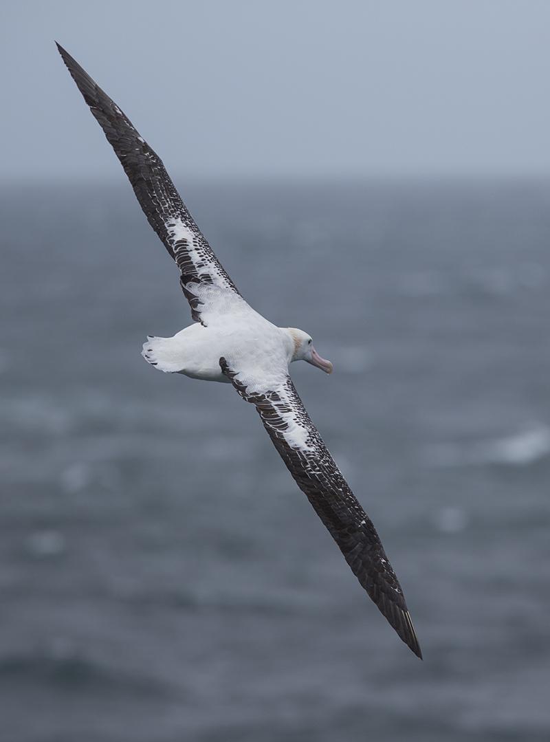 """""""Was Euch eben so verdroß,  das war der Ruf des Albatros.  Wehe dem, der ihn vernimmt:  Sein Schicksal ist vorausbestimmt."""""""