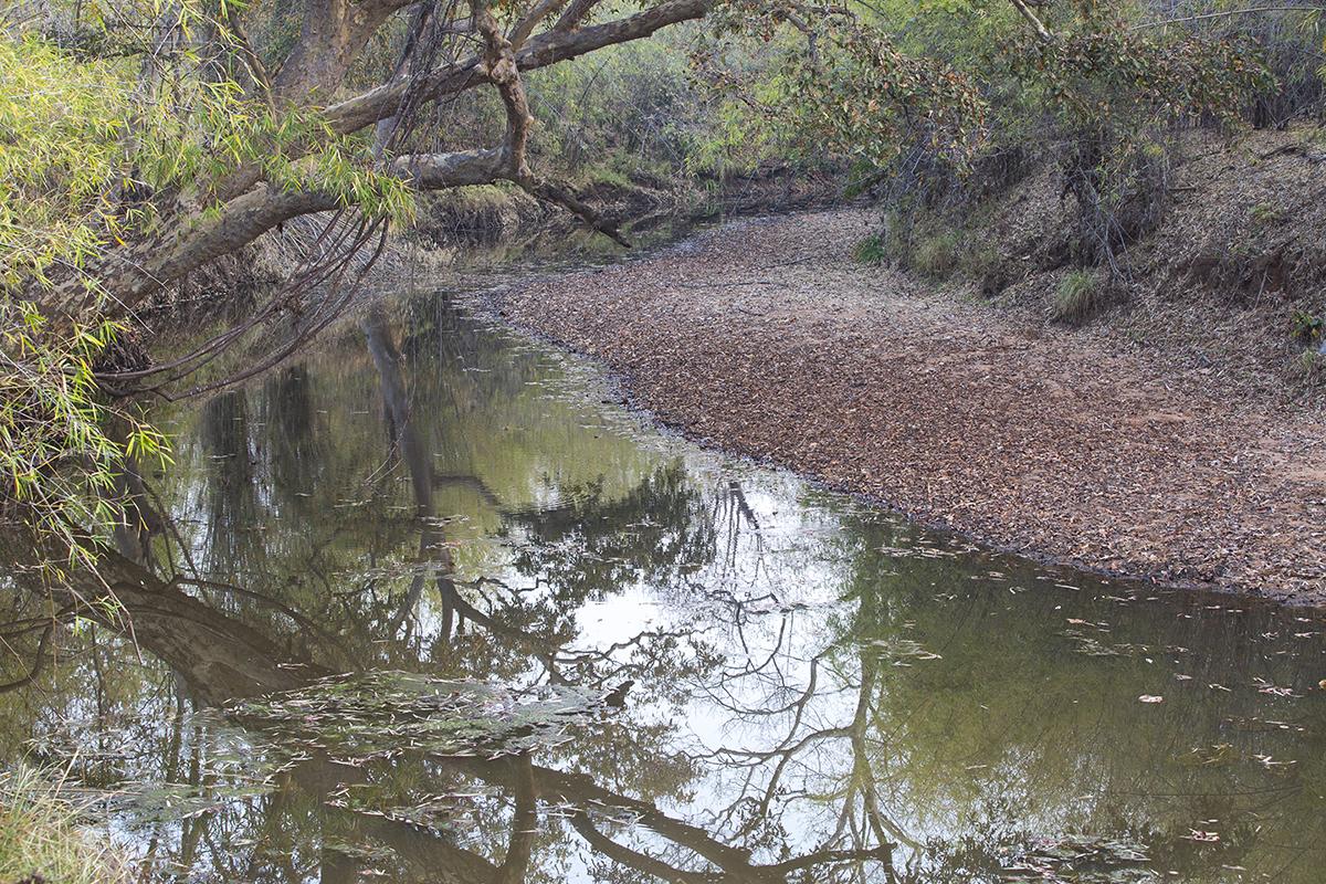 Natürliche Wasserstelle im Tadobagebiet am Morgen.