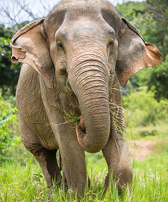 Elephant pic.jpg