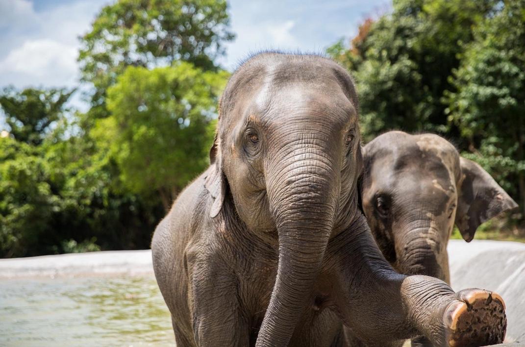 elephant 7.jpeg