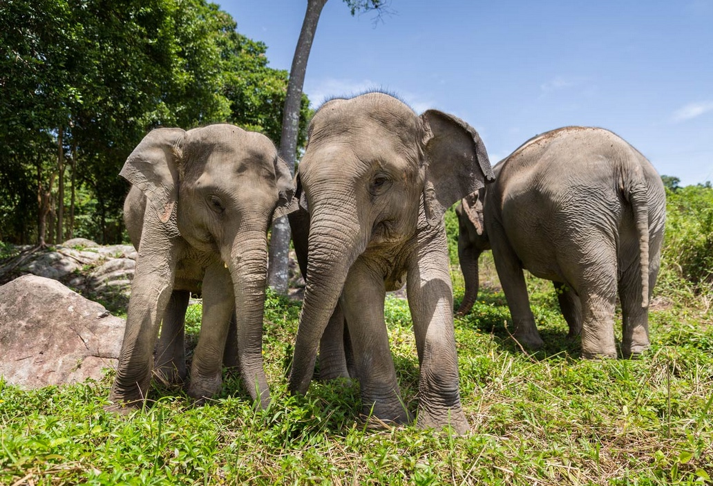 elephant 5.jpeg