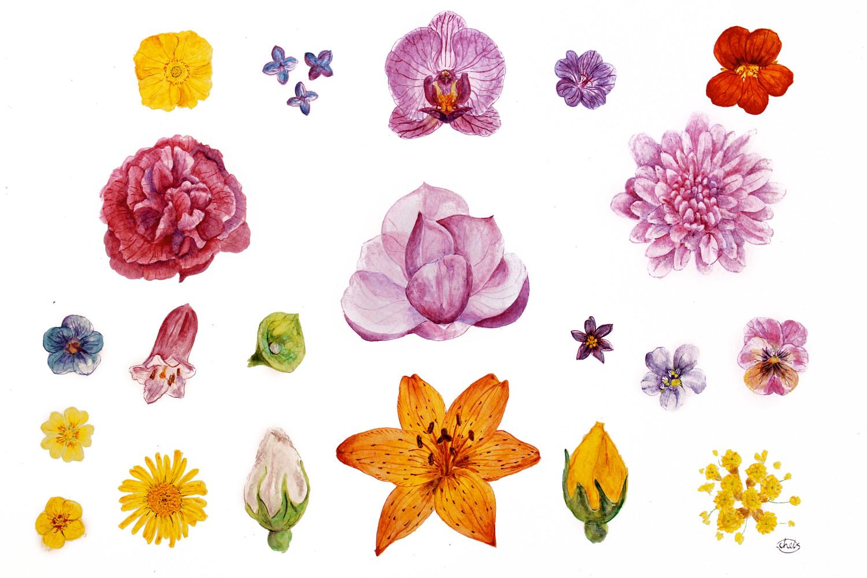 21 FLOWERS