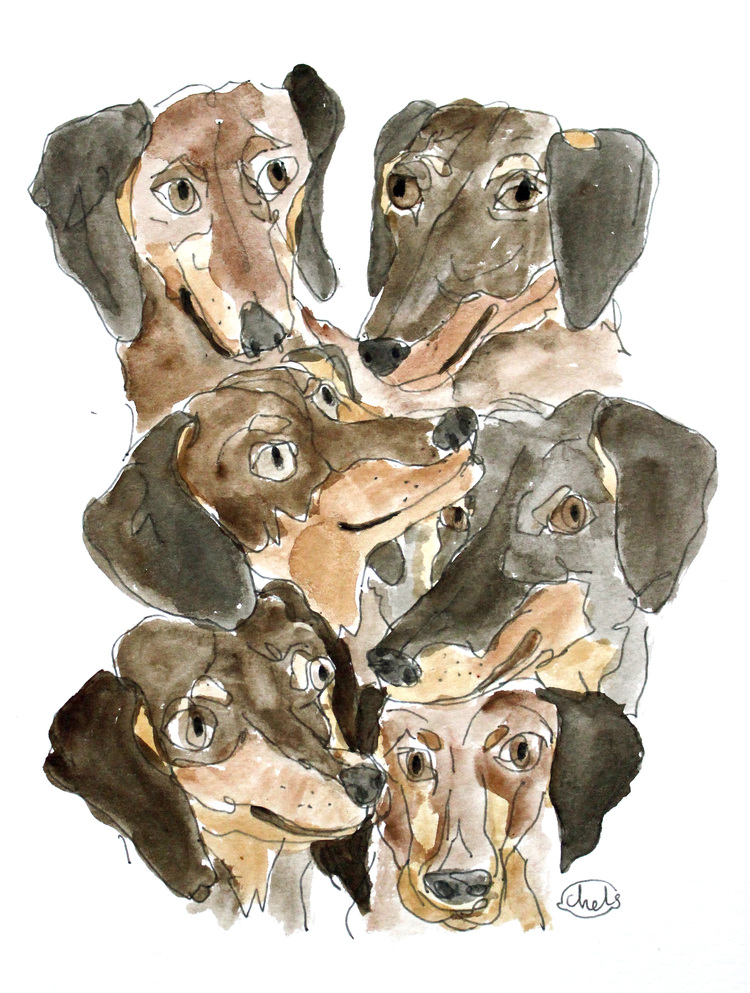 BUNCH OF DACHSHUNDS