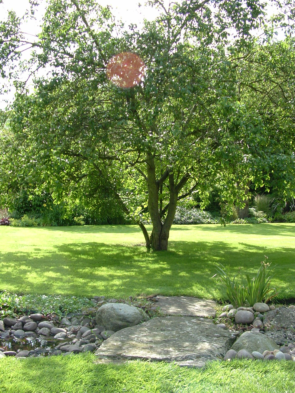 An old fruit tree in an open lawn with field stone 'dry stream bed' in front, a visual link between the stone terrace and the ponds.