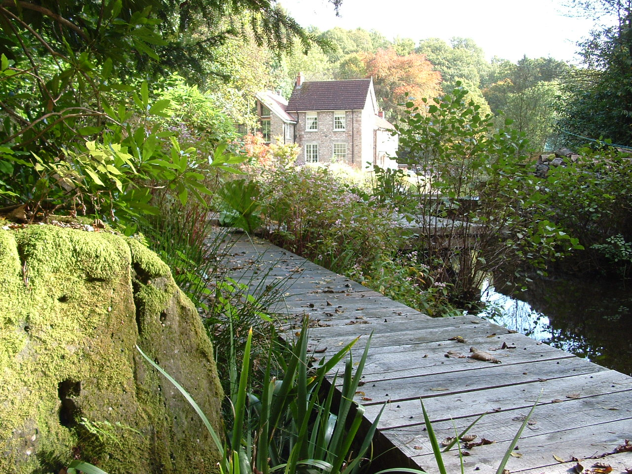An oak boardwalk by a lake and a huge moss covered boulder in a large Monmouthshire garden.
