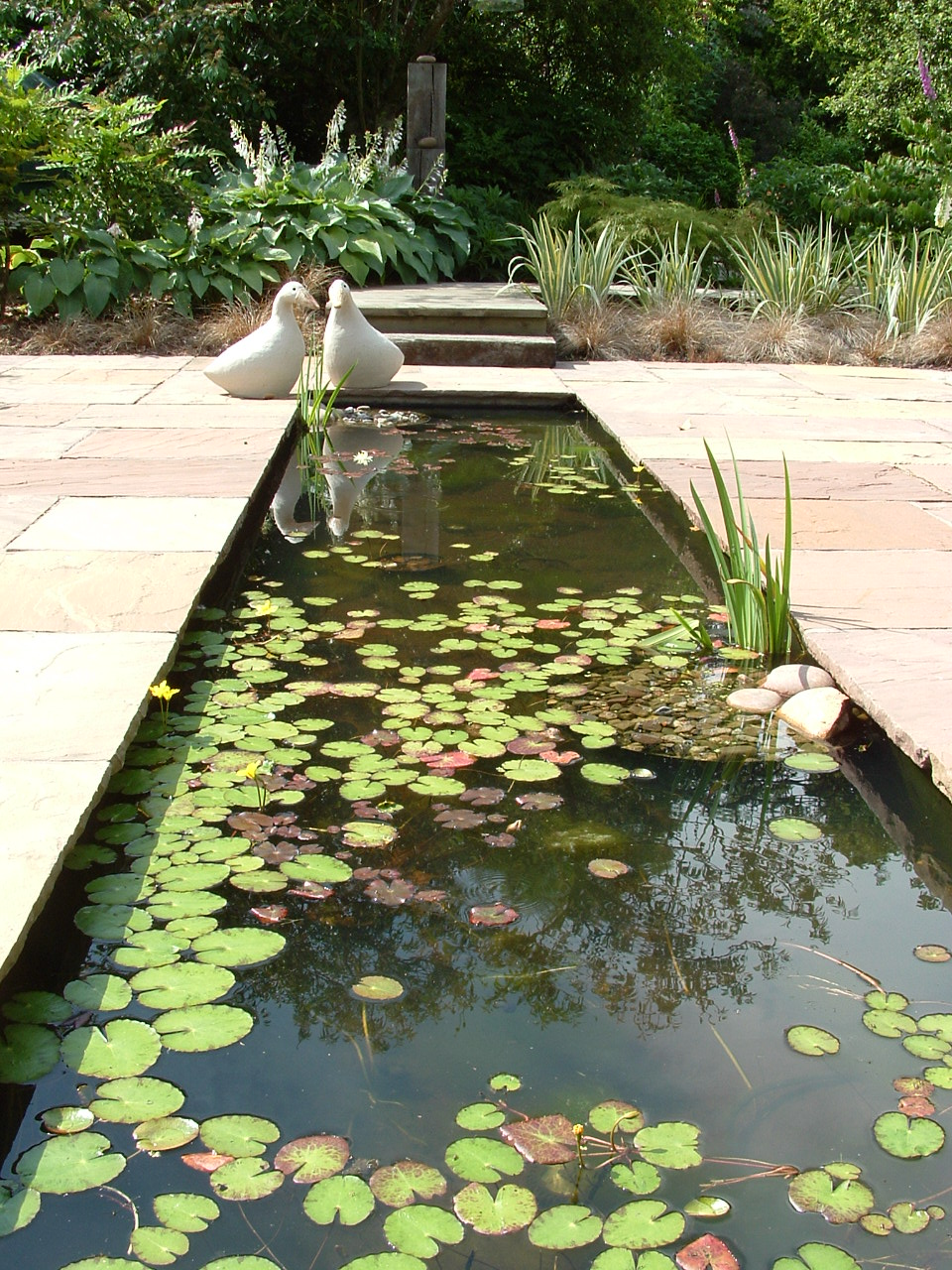 Formal water feature cut into a contemporary terrace garden with woodland planting behind.