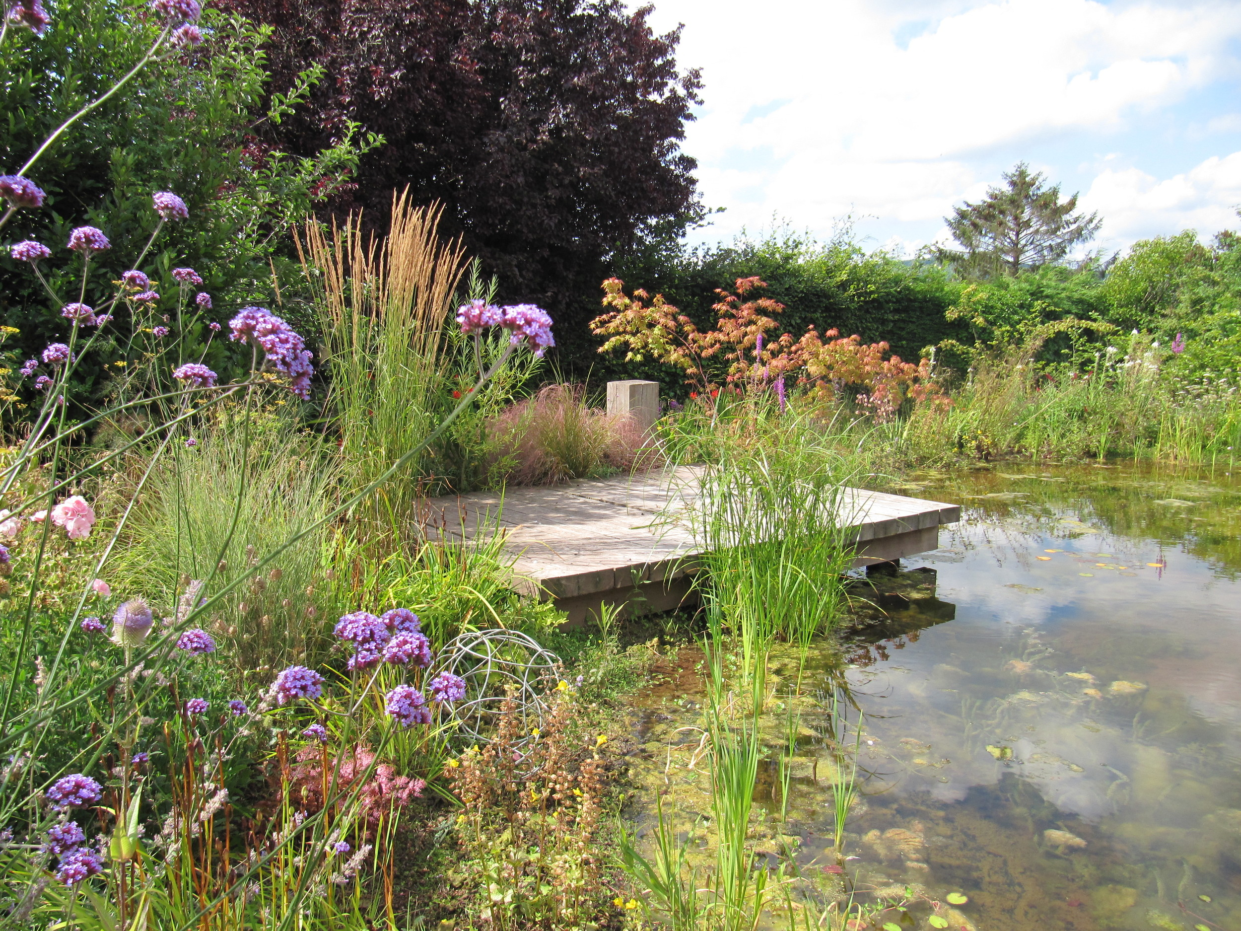 A pond designed to benefit wildlife with a timber deck for 'dipping'.