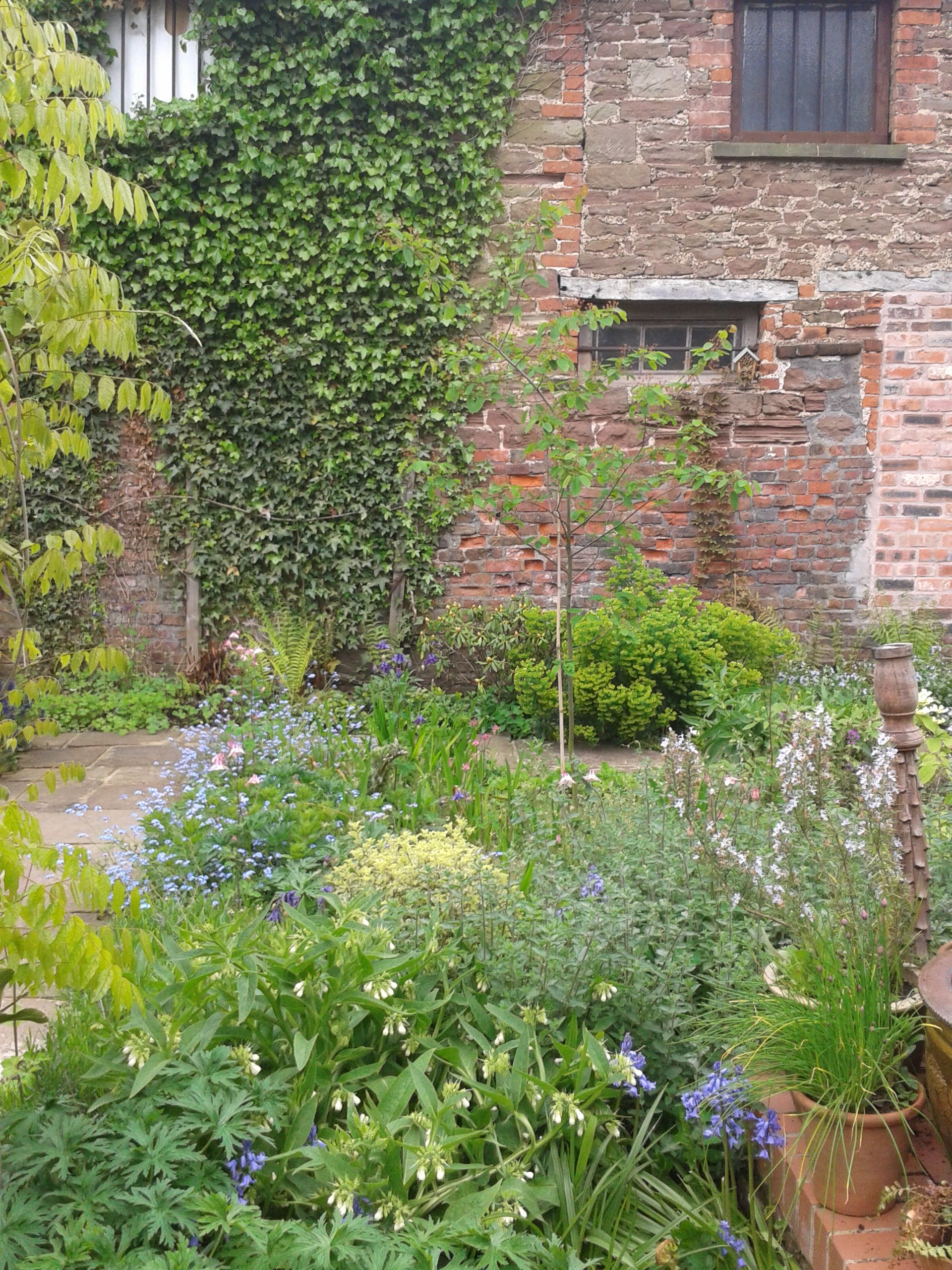 The lovely old walls surrounding this town centre listed house are enhanced by pretty cottage garden planting