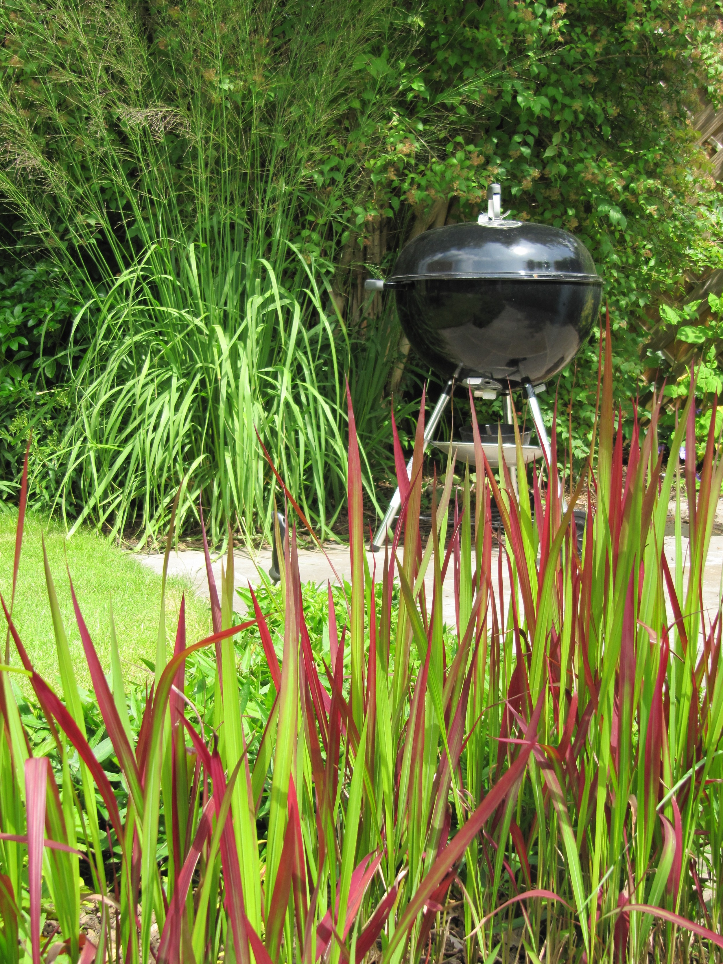 Dramatic grasses, Miscanthus species and Imperata cylindrica give pride of place to a shiny new black barbecue.