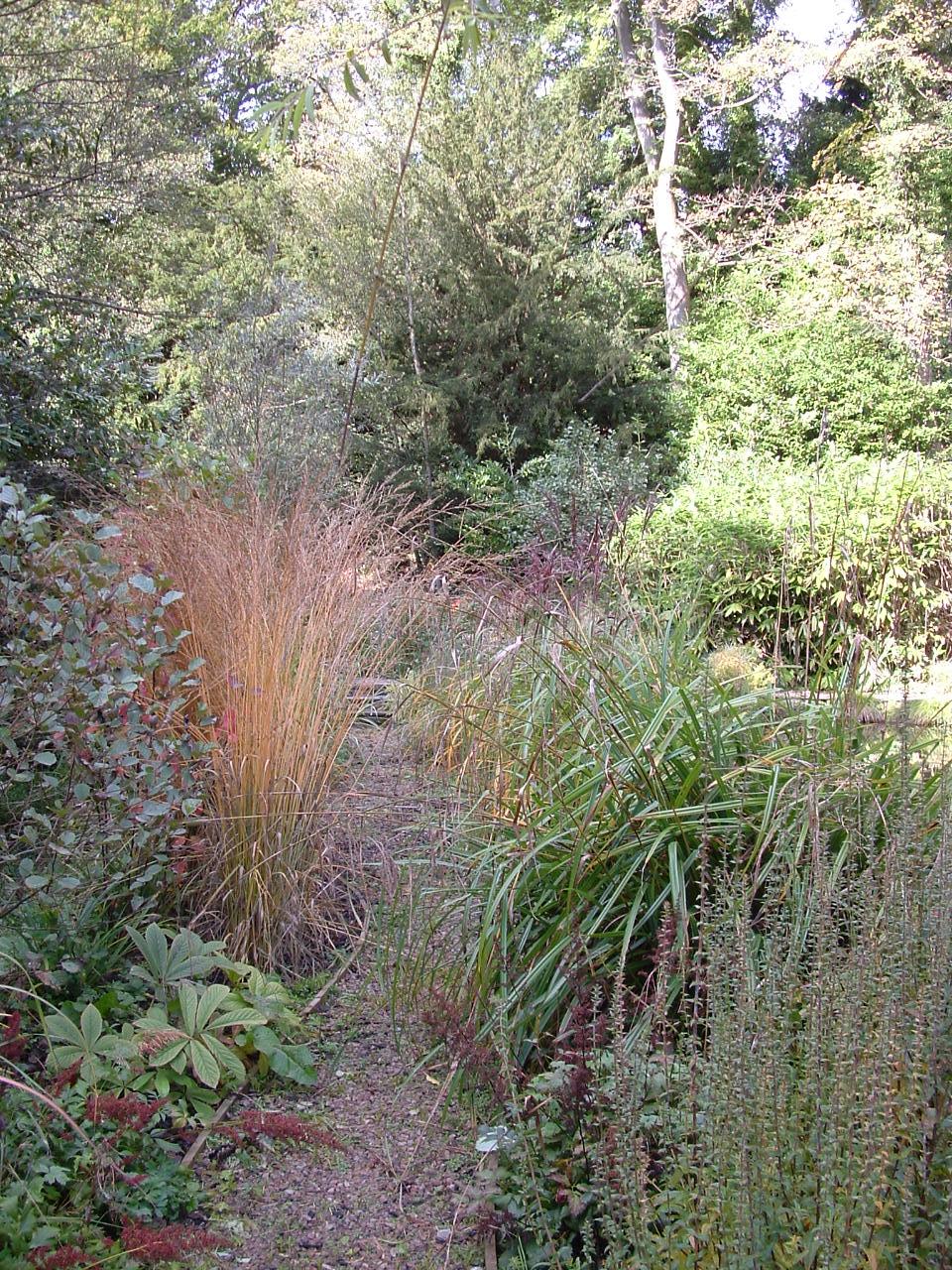 An autumn tinted Panicum grass forms a temporary focal point among lush woodland planting