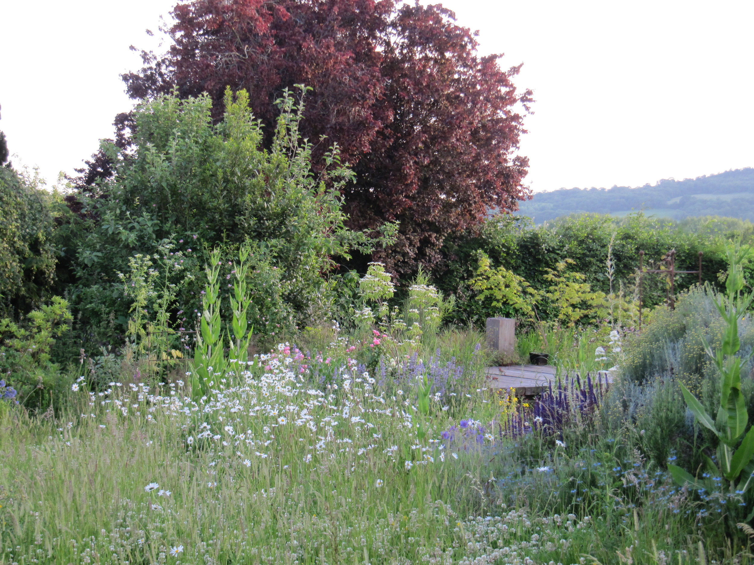Mid summer in a densely planted garden, full of colour and alive with birds and insects