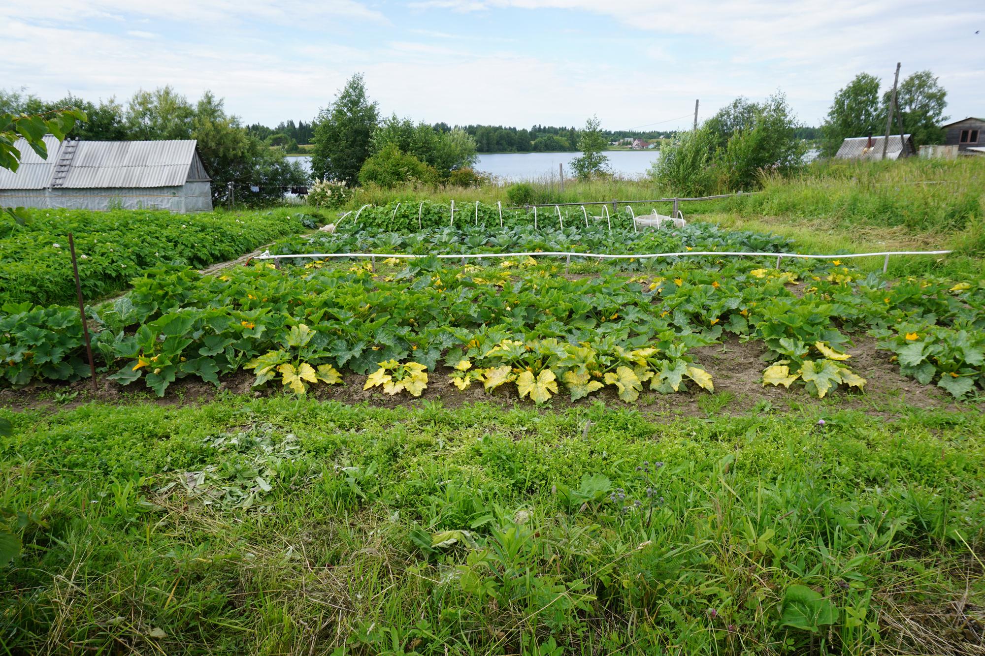 Bilde fra en tradisjonell russisk datsjaen -et sted hvor mange fortsatt henter vesentlige deler av sin mat.