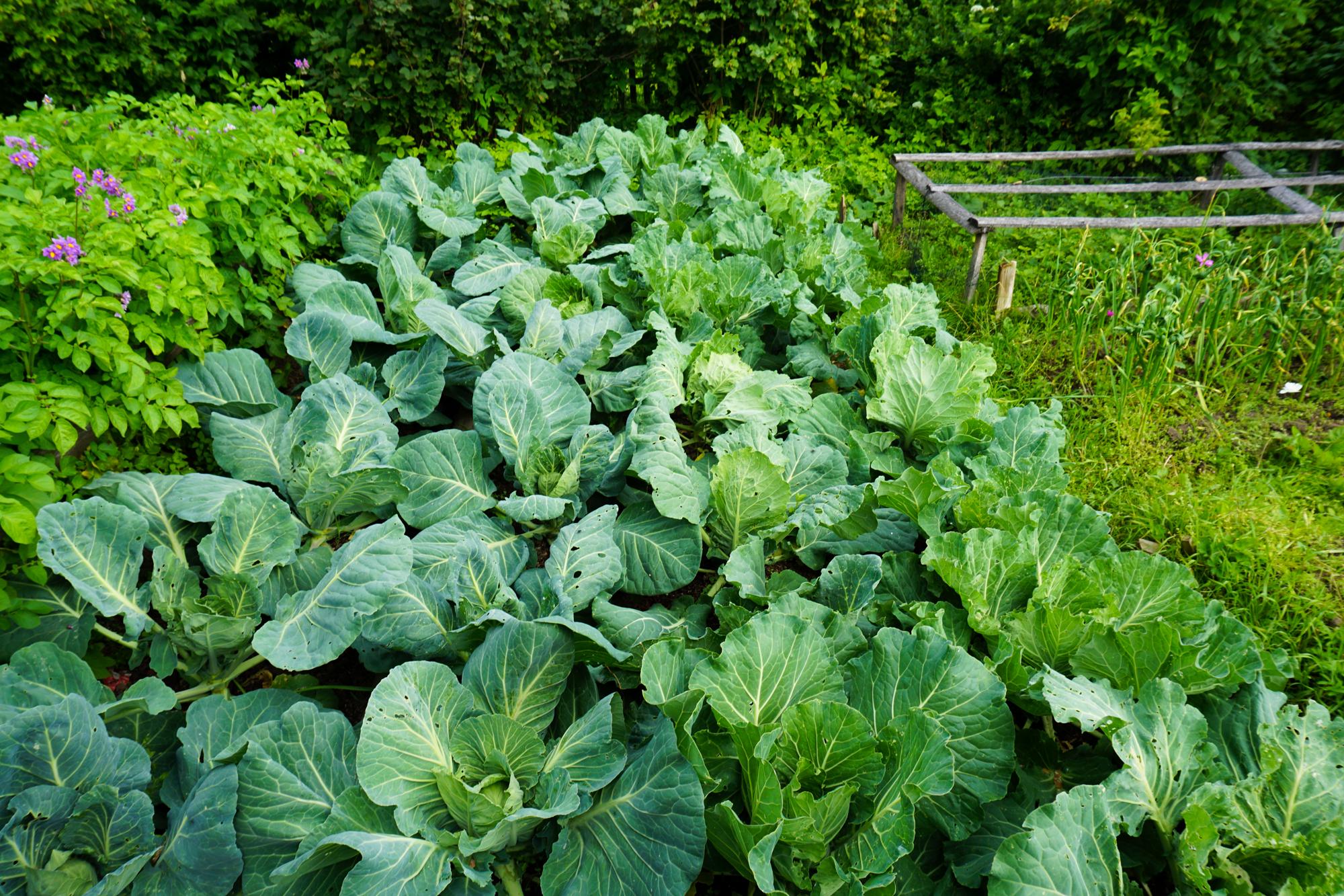 I denne datsjaen var nesten all gjødsling og jordforbedring fra gress og egen kompost.