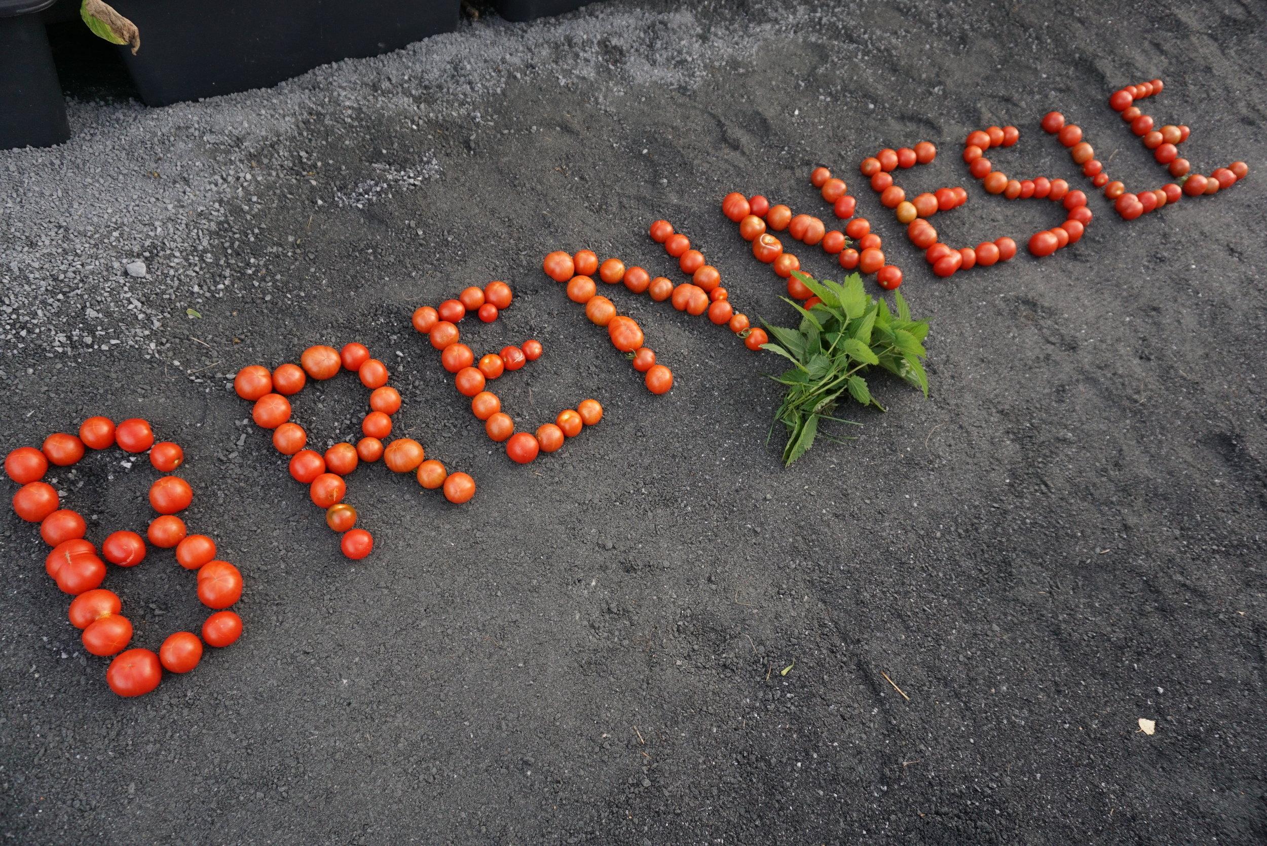 Brennesle kan bety mye både som kosttilskudd og gjødsel.