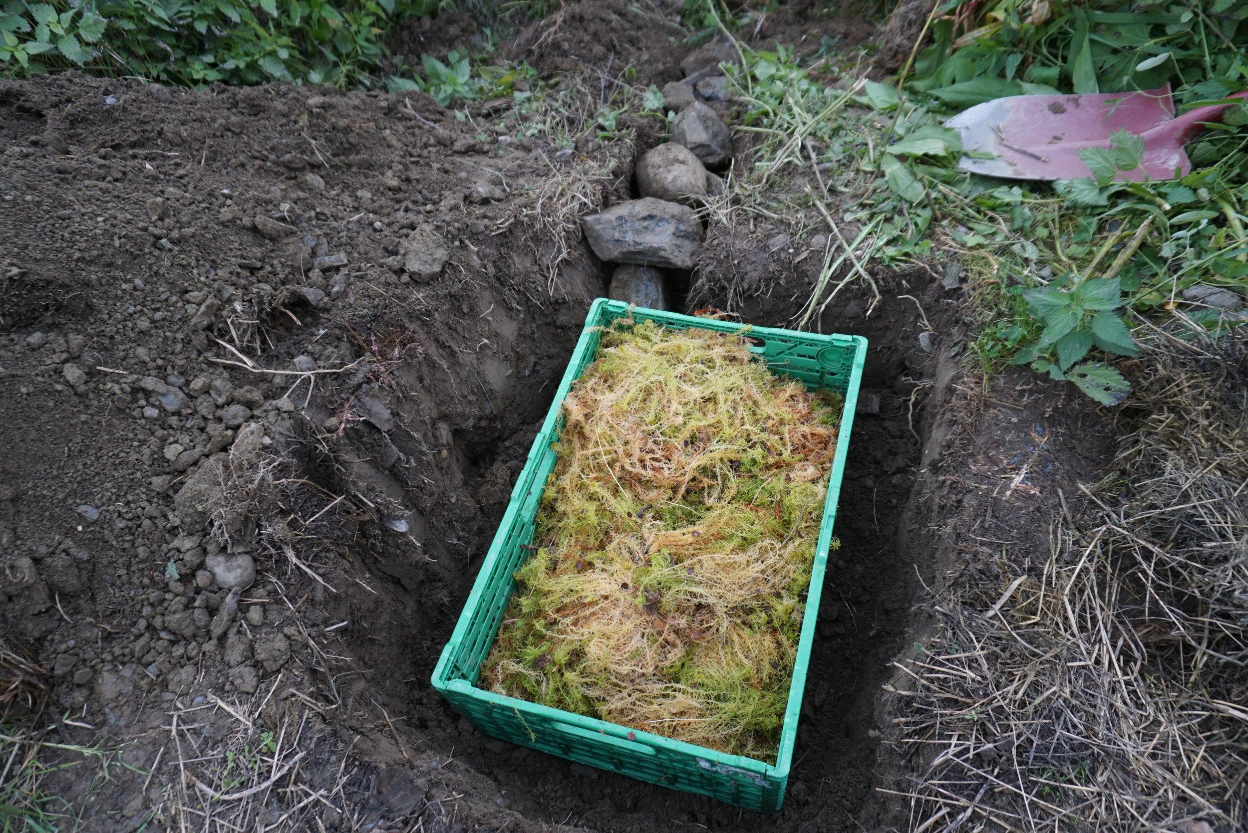 Lagringsgropen er lagt ut mot en skråning, med grøft for drenering