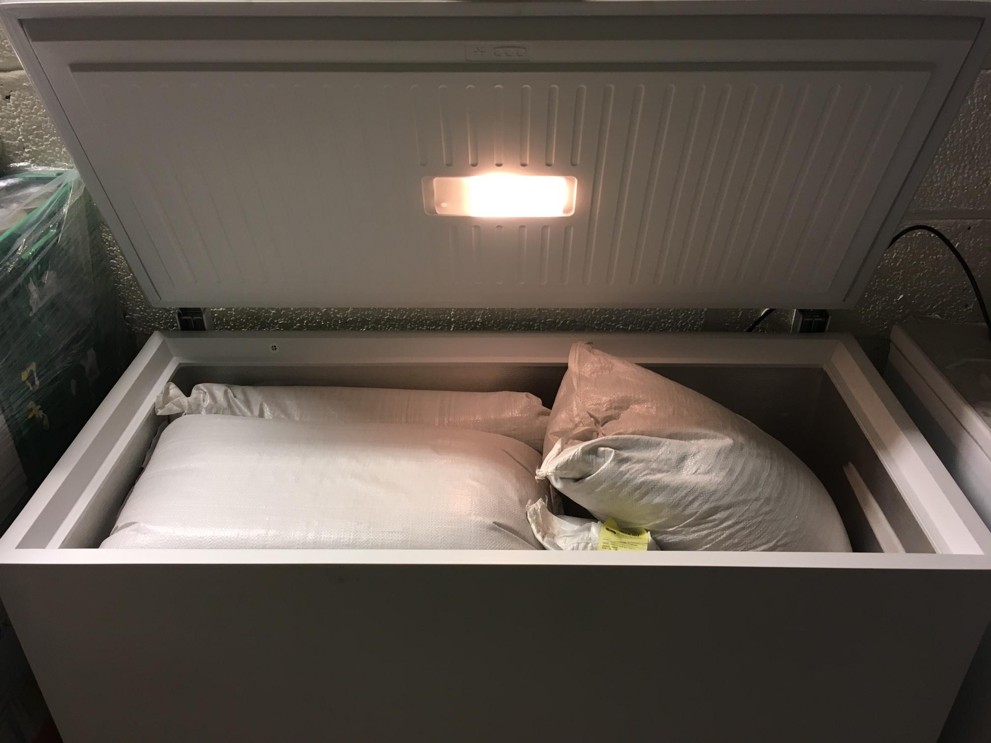 Det store frøfirmaet Norgro på Hamar lagrer frø av norske kålrotsorter i frysebokser gjennom mange år. Når frø tas ut, blir de spiretestet før de går til kunden. Foto: Sven Taksdal. Norgro