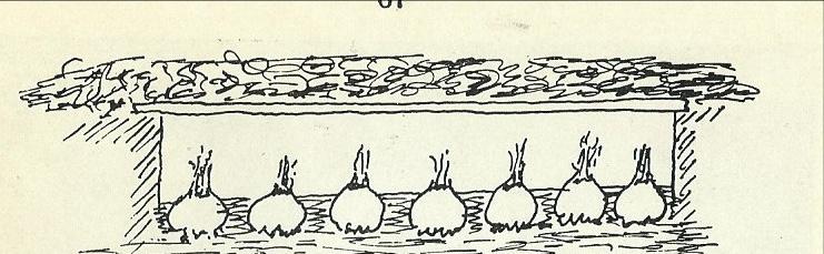 """Lagring av sellerirot i jordgrop med """"tak"""" av planker og dekke av halm, løv eller granbar. Bilde fra Hagebok for heim og skule 1949"""