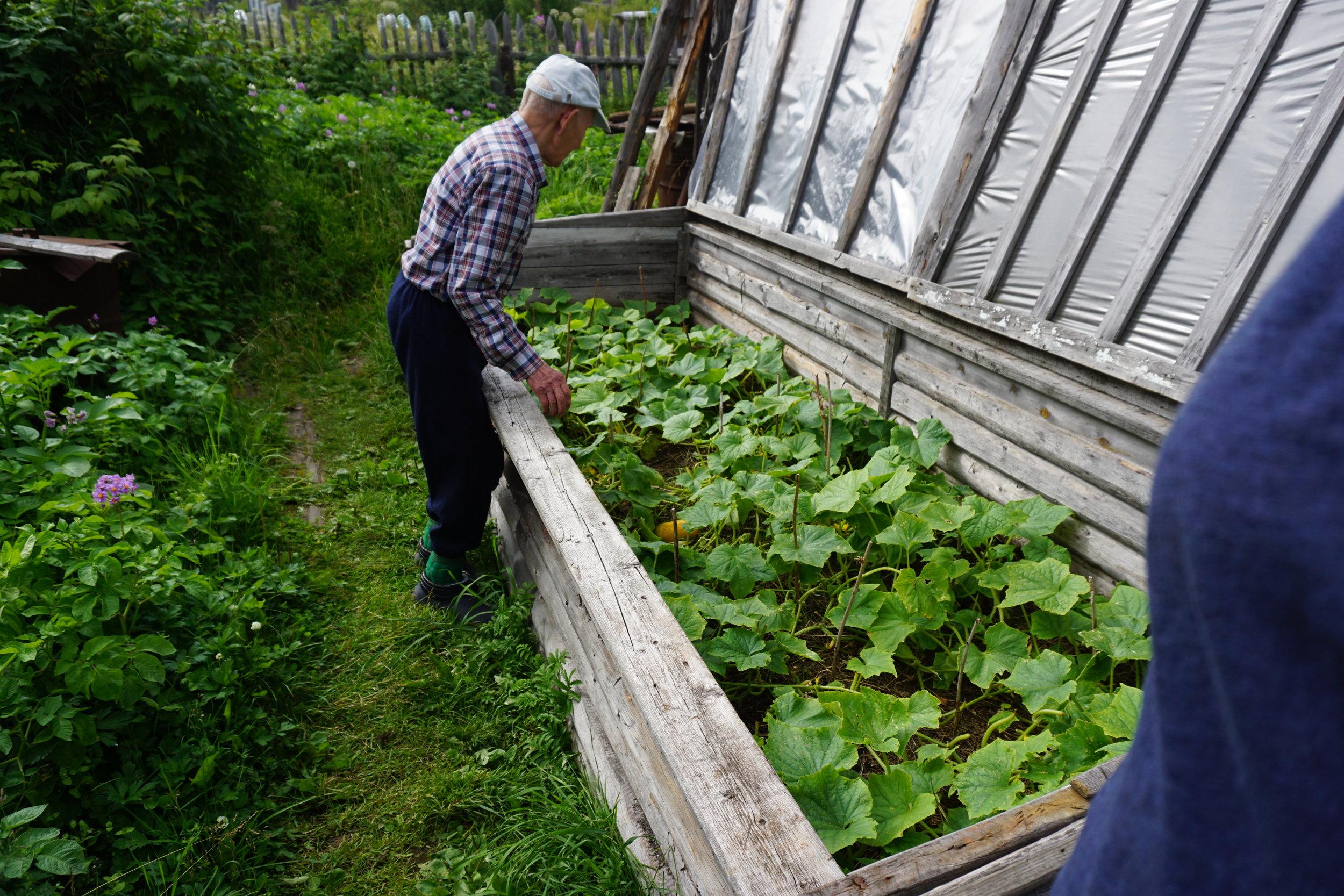 Den gamle mannen dyrket de samme asieagurken han hadde dyrket hele livet. Frøene hentet han fra agurker som fikk modne helt og bli gule før han hentet ut frøene, vasket de rene og la de til tørk. Selv driver han frem årlig nye frø og lagrer de tørt i romtemperatur. Men agurkfrø er like greie å fryse som alle andre frø.