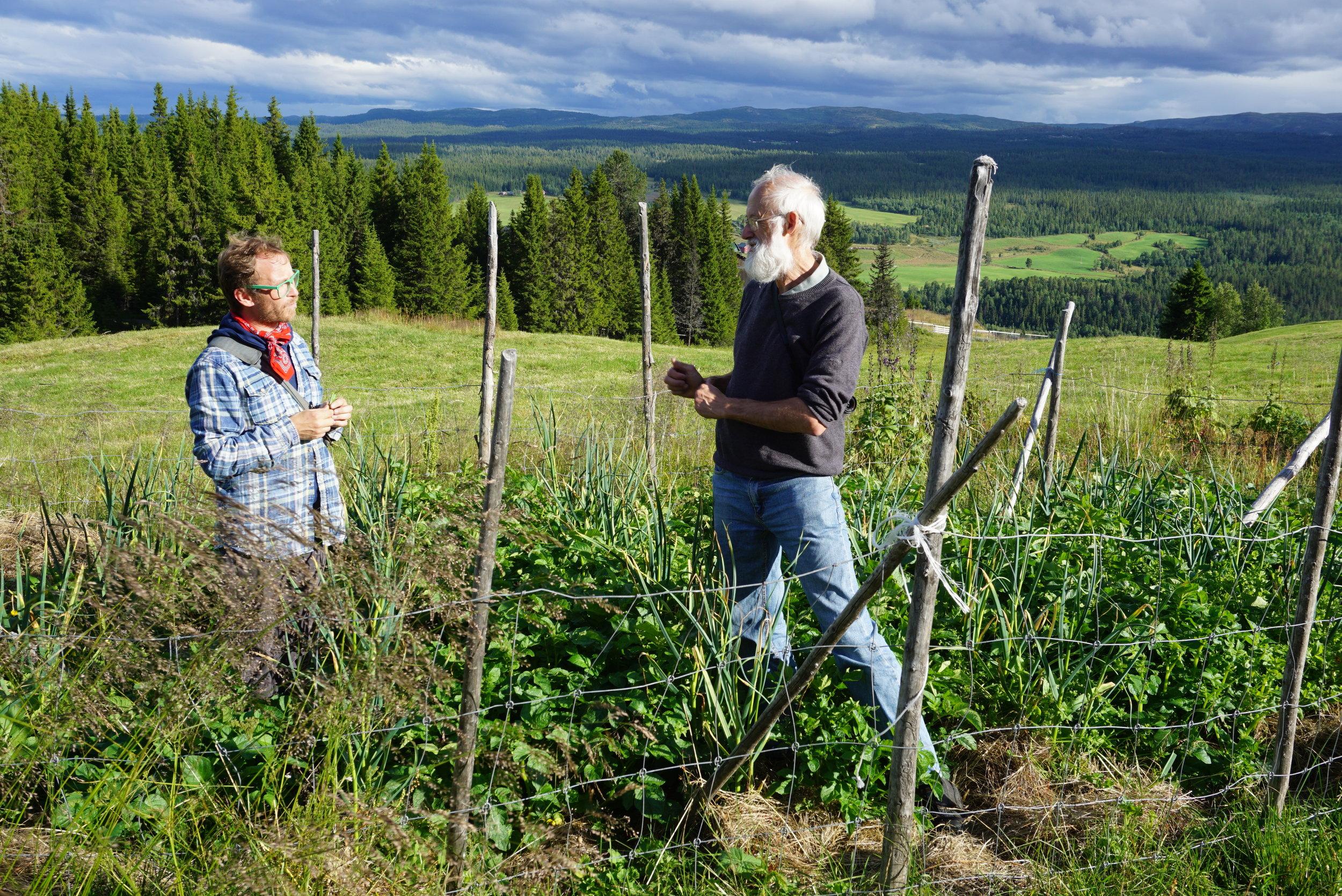 Eirik Lillebøe Wiken og Stephen Barstow fra KVANN (Kunnskap og vern Av Nytteplanter i Norge)/Norwegian Seed Savers på besøk i Valdres. Hvitløksfelt i potetåker 940 moh.