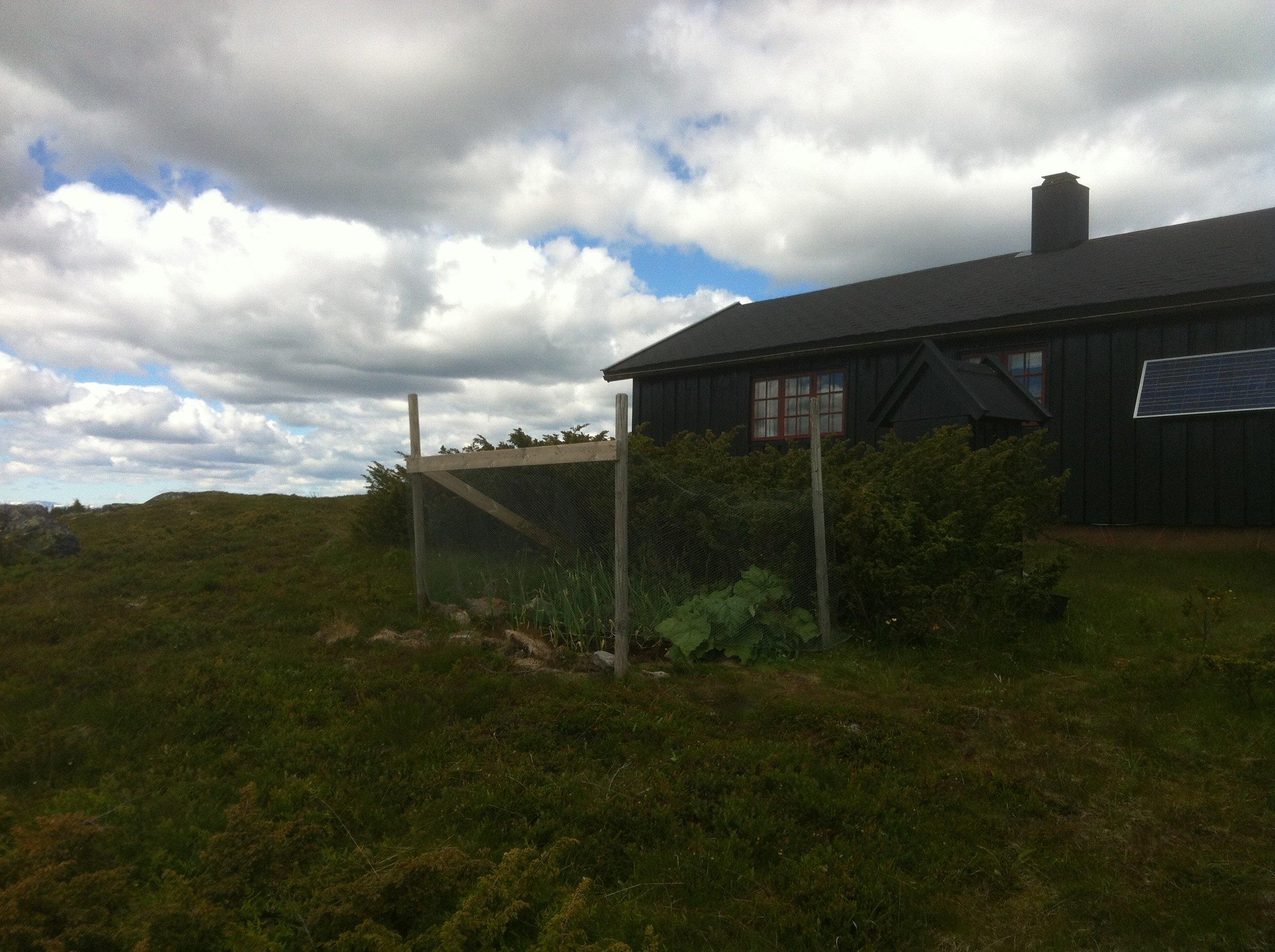 Torstein Jæger Dahlen prøver ut 10 hvitløkssorter på hytta i Valdres 1050 moh.