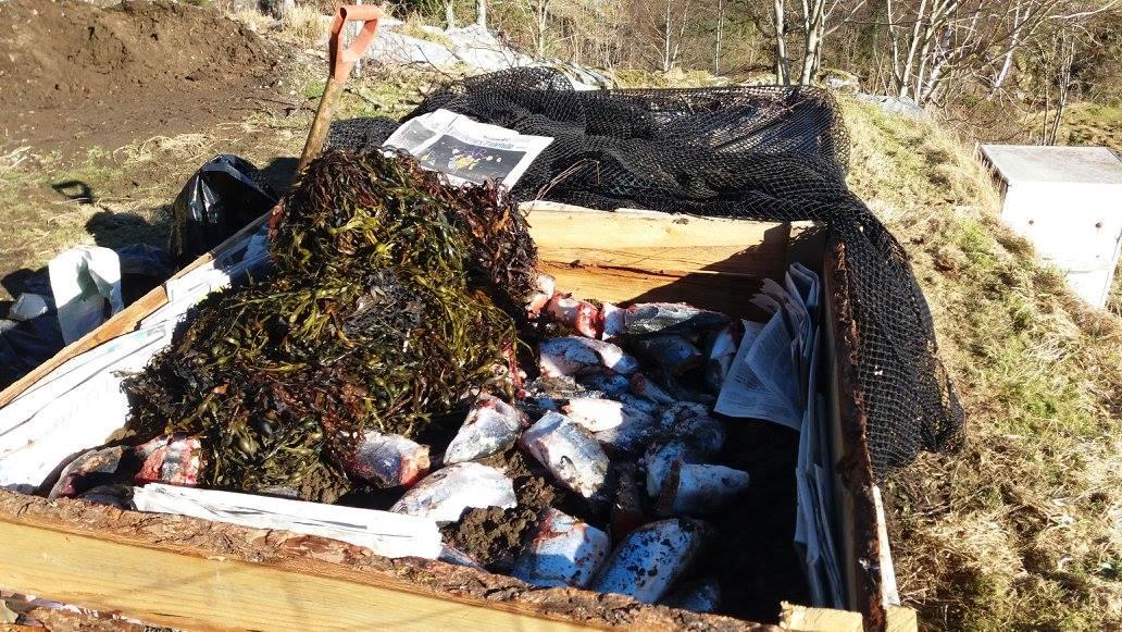 Merethe Lauen eksprimenterer med og lager næringsrik kompost av fiskeslo og tang og tare.