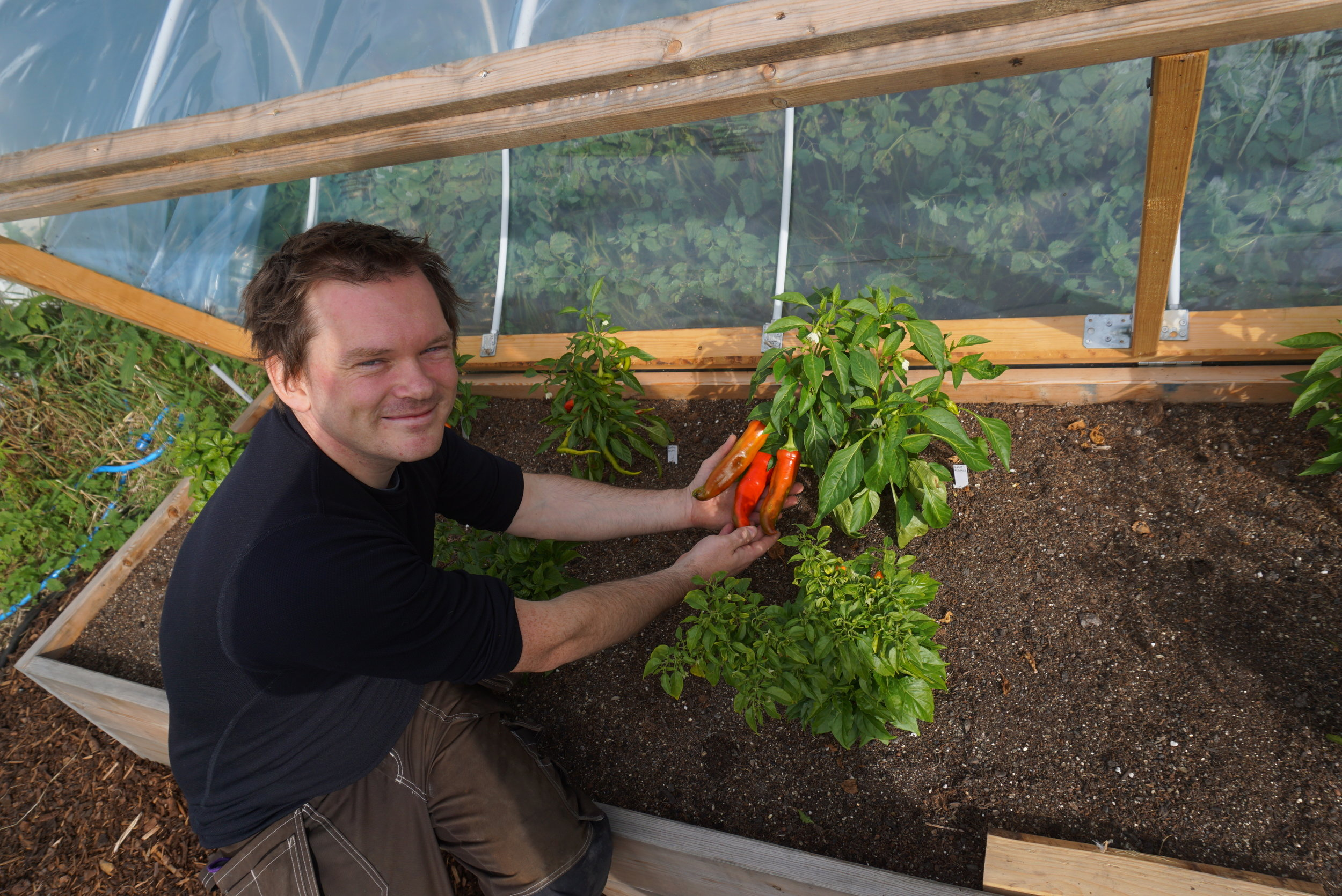 Christopher er lidenskapelig dyrker. Chilli dyrker han hele året innendørs, men i sommerhalvåret dyrkes det i veksthus, langs husvegger og ikke minst under bøylesolfangeren.
