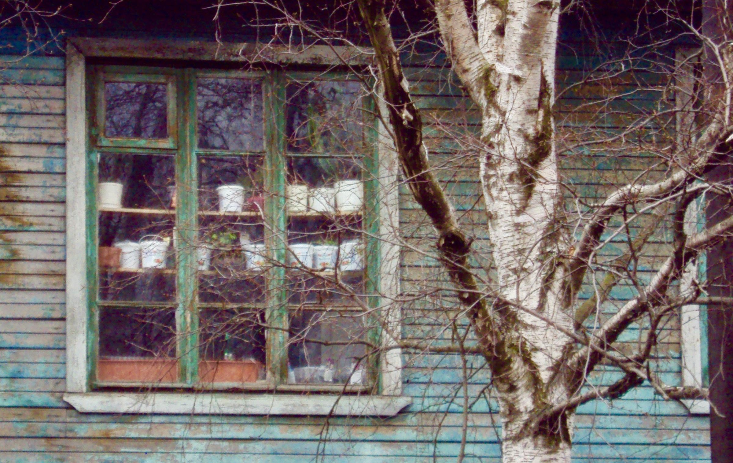 Når situasjonen krever det, bruker man det man har. Bilde er av dyrkingshyller i et bolighus i Arkhangelsk.