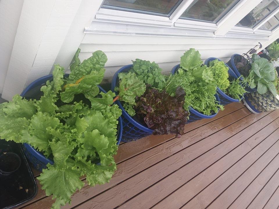 Merethe dyrker mye på verandaen også vår og høst - og omfanget øker i både mengde og arter