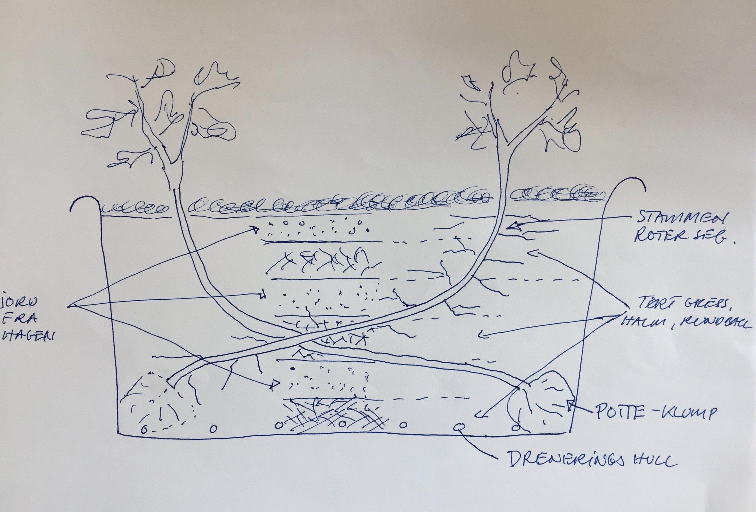 Skissen viser prinsippet vi følger når de slengete og forvokste plantene settes ut i baljene.