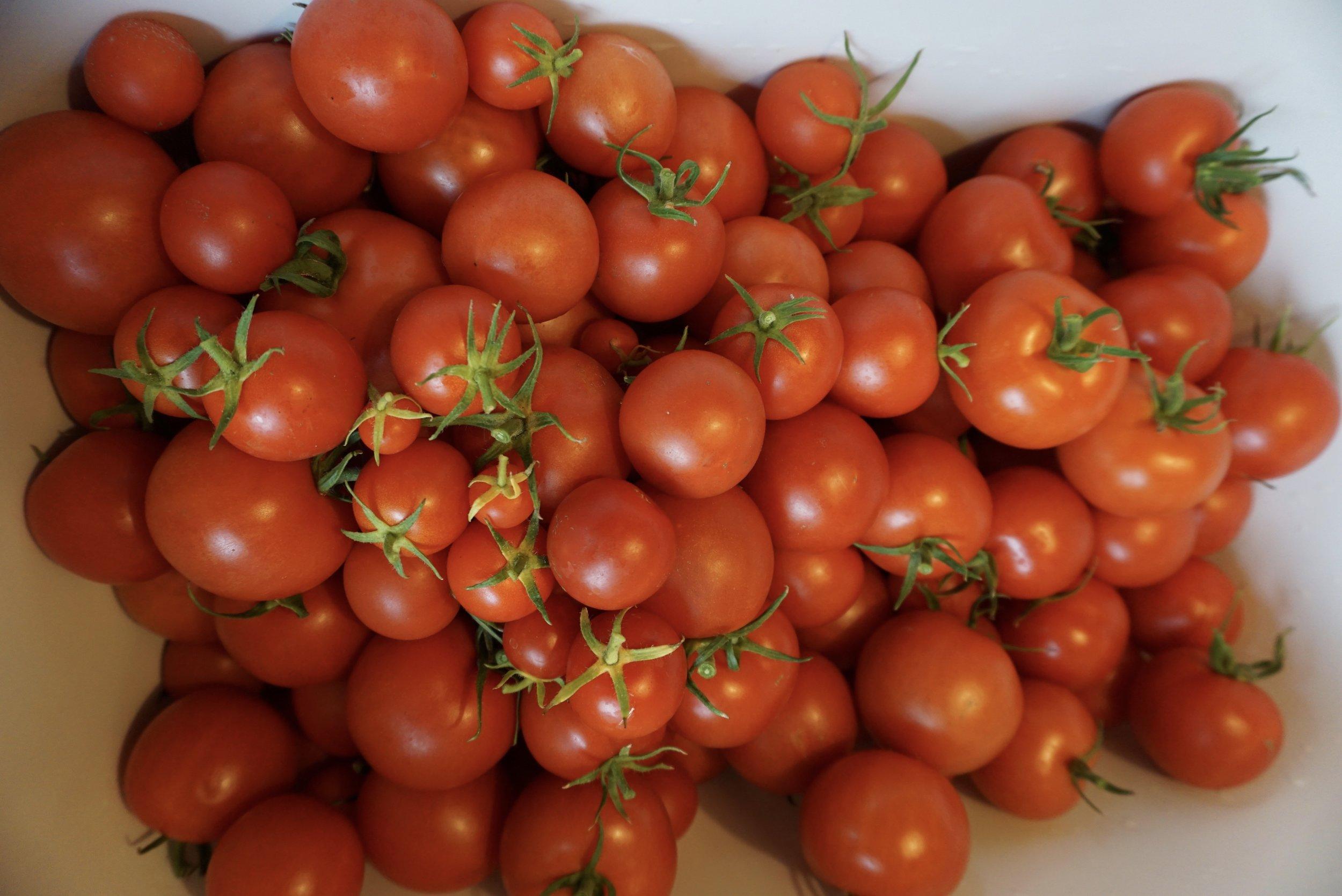Bloody Butcher ser ut til å være samme sort som Matina. De virker like å se på og oppfører seg likt. Pene, jevne tomater.