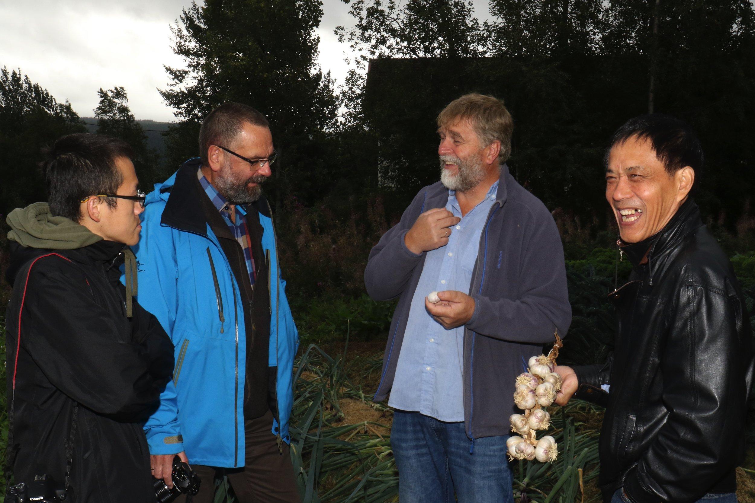 Doktorgradsstipendiat Min-Rui Wang, Dag-Ragnar Blystad forsker ved NIBIO, Anders Nordrum og professor Qiaochun Wang med normalt utviklet løk fra Beredskapshagen til Datsja.