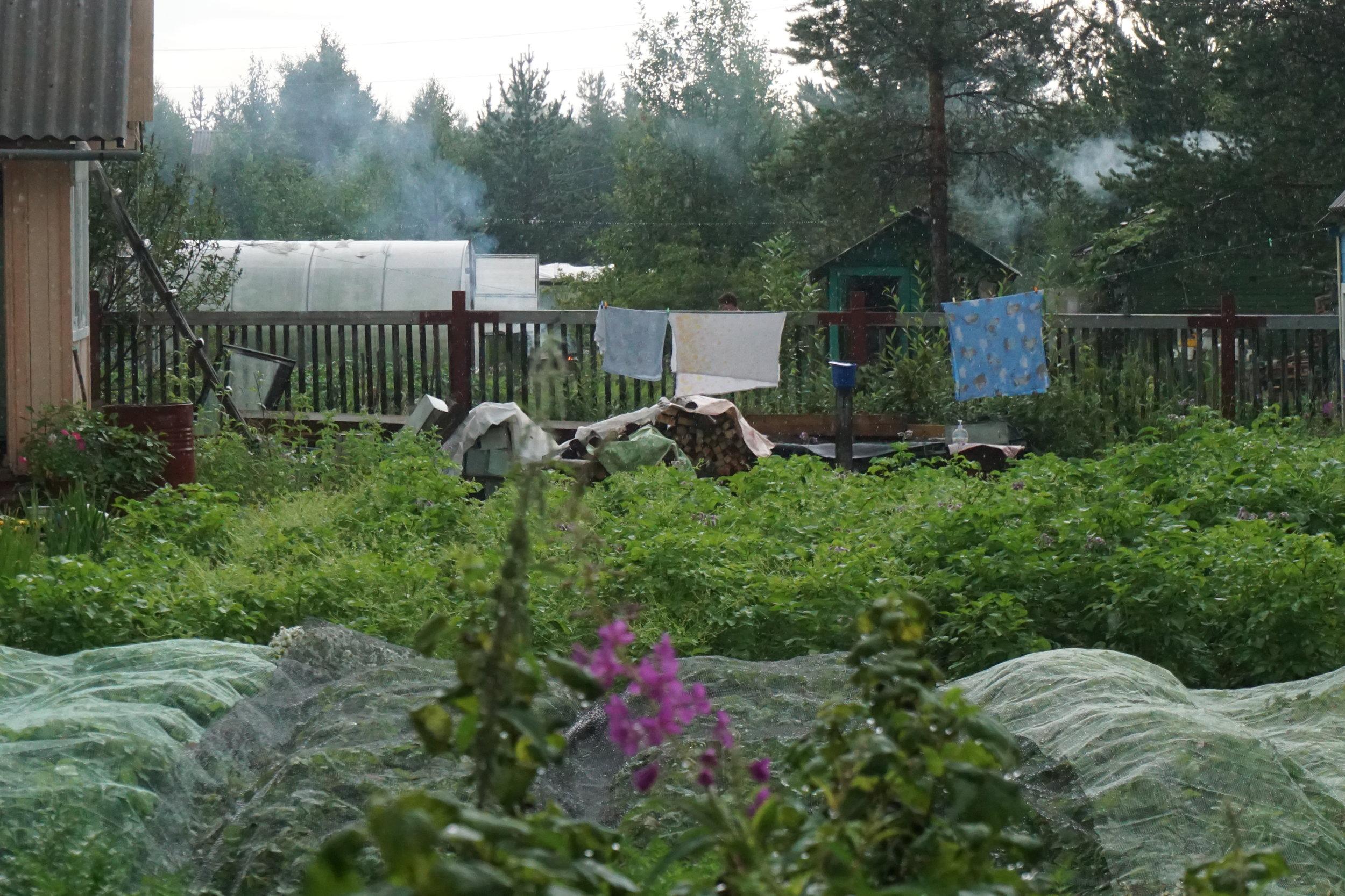 Synet av utallige veksthus er like selvfølgelig som røyken fra alle saunaene på datsjaene i Russland