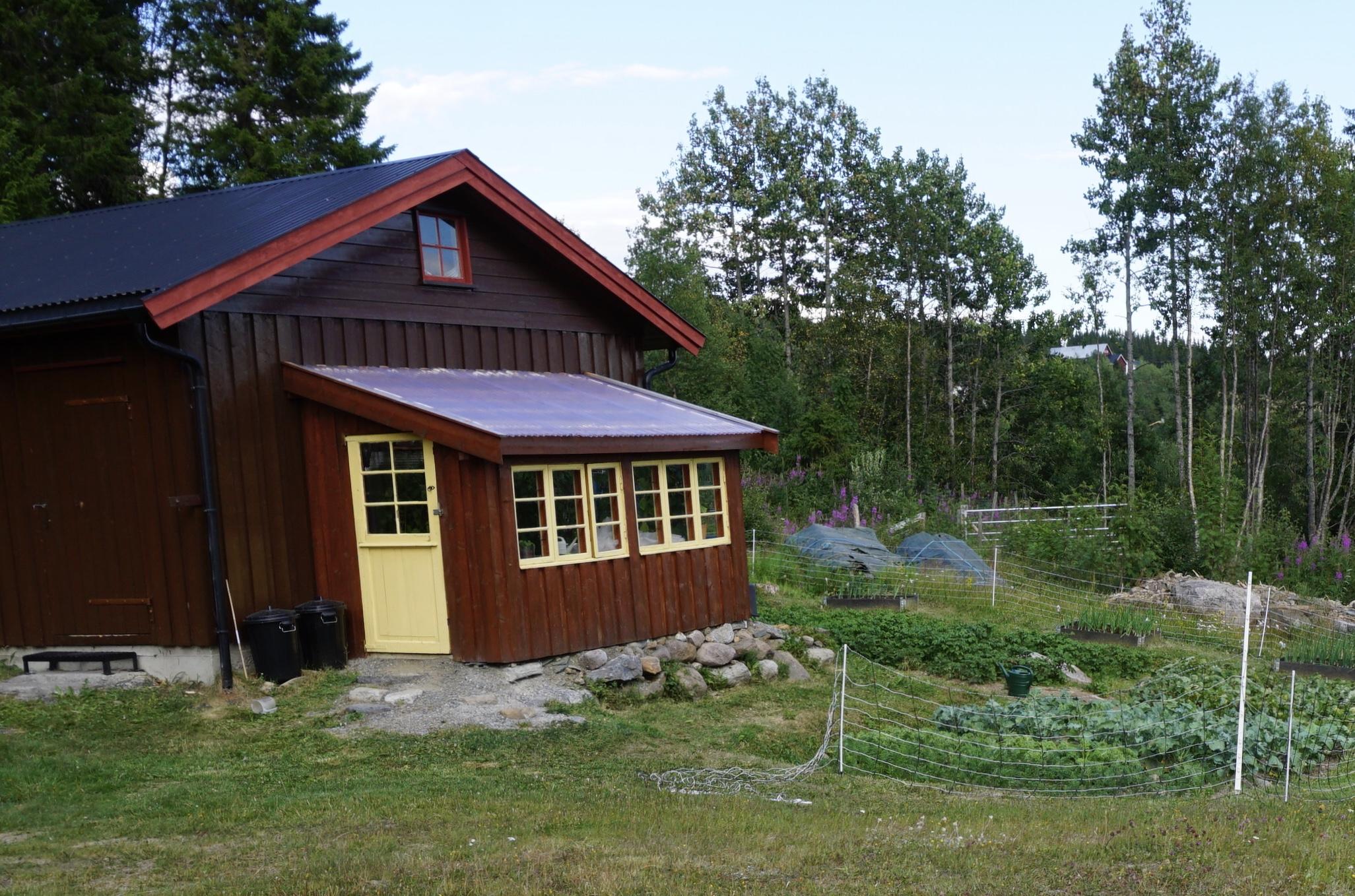 I Steinsett-bygda har Odd og Ågot Kvakestad bygd veksthus/dyrkingsrom av de gamle hyttevinduene. Taket er dekket med gjennomsiktige bølgeplast plater.