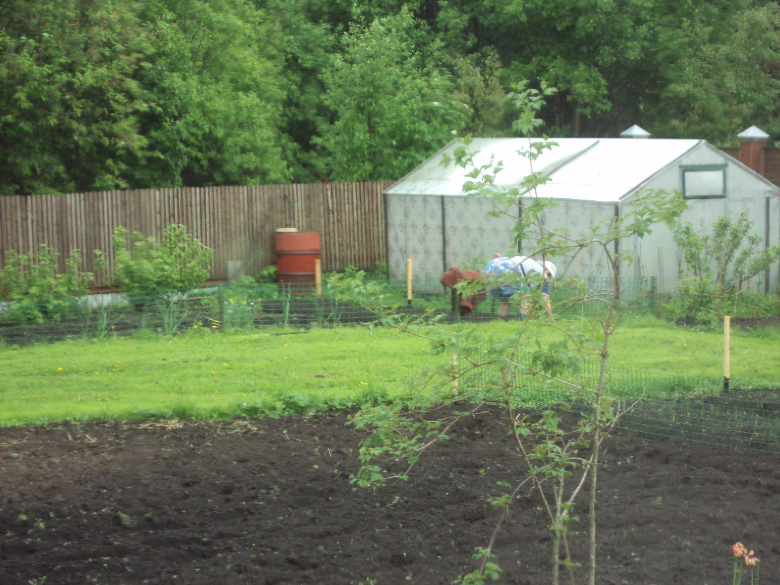 På Øst Europa datsjaer finner man ofte både plen og en annen plan med plenen - side om side. Etter noen år med gressplen, bytter kjøkkenhage og plen plass, og dette er med på å bidra til et godt vekstskifte.