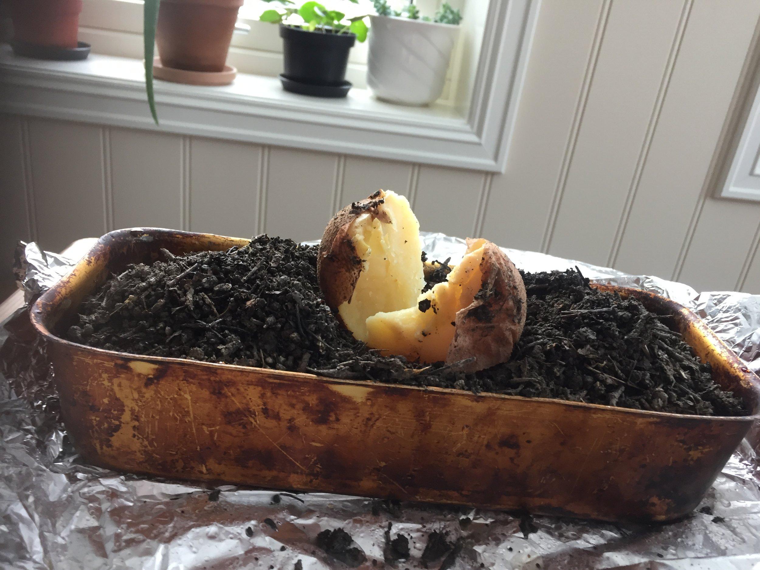 Når poteten er kokt, er jorda ren.