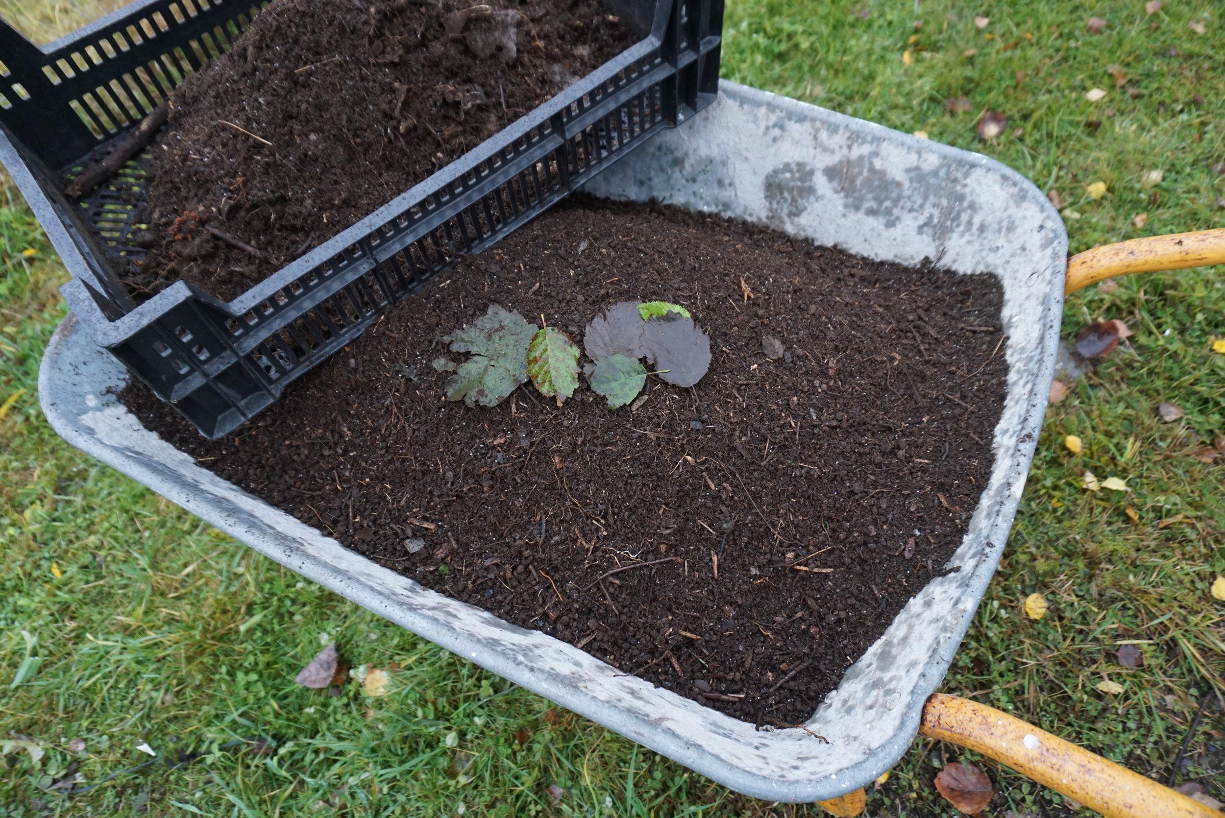 Orejord soldes gjennom en grønnsakskasse. Høsten er en fin tid å sanke på, men så fort det er tint nå på våren er det bare å hente - om grunneieren sier ja og området ikke er fredet.