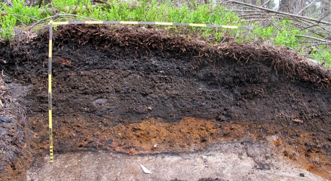 Jordsnitt fra en gammel norsk kullmile, viser hvordan kullet har bidratt til å bygge jordsmonnet.